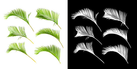 Collection of green palm leaves isolated on white background with alpha chanel Wall mural