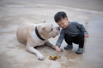 asian baby boy playing with American Pitbull Dog.boy is 2 years old.