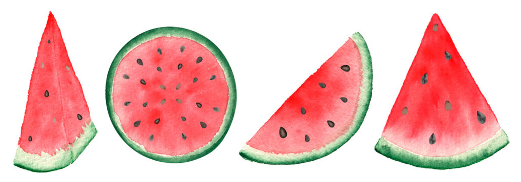 slices of watermelon on white background. Watercolor hand-painted illustration  of sweet melon.