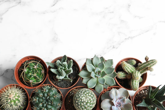 Flat lay composition with different succulent plants in pots on marble table, space for text. Home decor