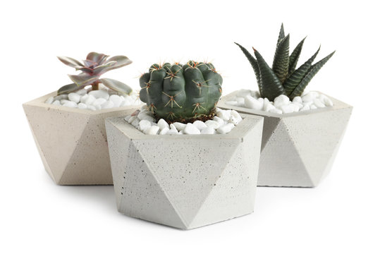 Beautiful succulent plants in stylish flowerpots on white background. Home decor