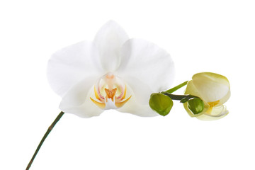 Tuinposter Orchidee Orchid isolated on white background.