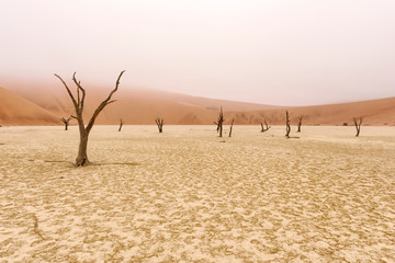 Dead tree in Deadvlei, Namib-Naukluft National Park, Namibia