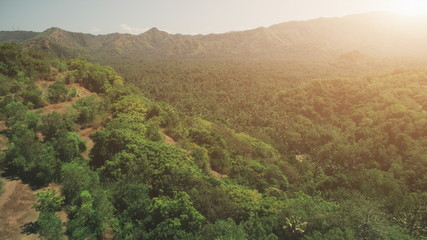 Aerial Drone Flight: mountain forest in orange glow sunset light. Travel Wild Nature Recreation Paradise Tourism Concept. Beautiful nature landscape. Tropical Bali Island, Indonesia
