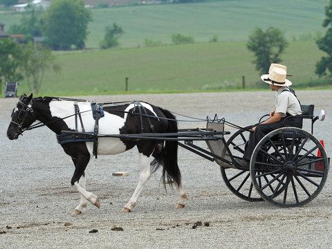 Amish Horse & Buggy - 107