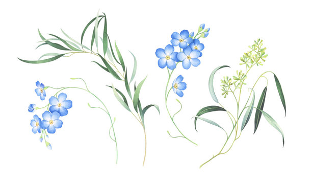 Watercolor set of forget me not flowers and eucalyptus isolated on white background.