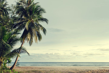 Fototapete - Palm and tropical beach