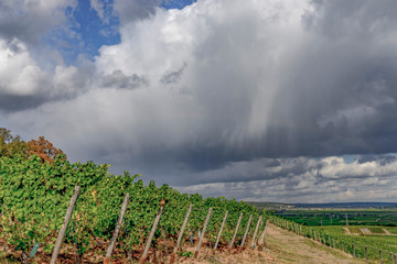 Vineyards in the Rheingau, Hesse, near Ruedesheim in summer, with rainy cloudburst