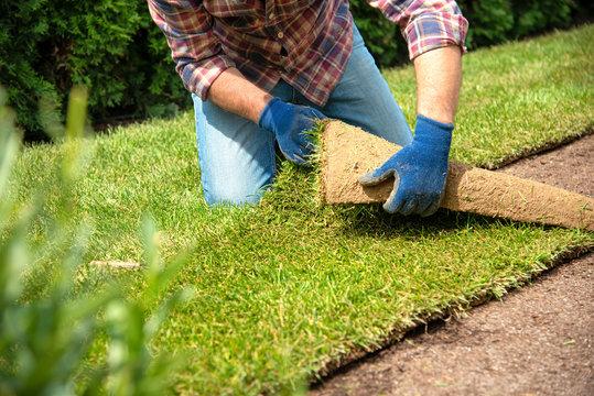 Installing turf rolls in the garden