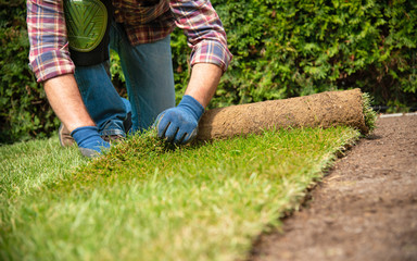 Papiers peints Saumon Installing turf rolls in the garden