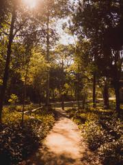 Caminho entre as árvores