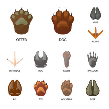 Vector illustration of animal and print sign. Collection of animal and footprint stock symbol for web.