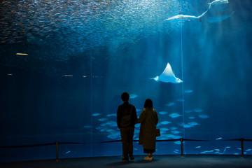 silhouette couple look at fish in aquarium Wall mural