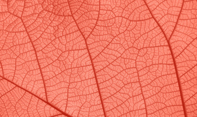 Coral pink toned close up texture of leaf veins Wall mural