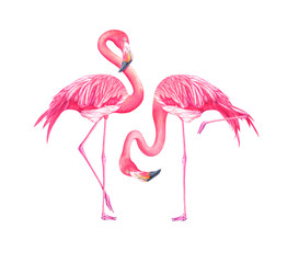 Set of watercolor exotic flamingos isolated on white background