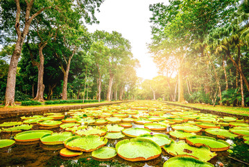 Botanical garden on Mauritius island