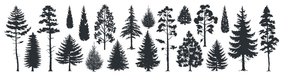 Pine tree silhouettes. Evergreen forest firs and spruces black shapes, wild nature trees templates. Vector illustration woodland trees set on white background Fotomurales