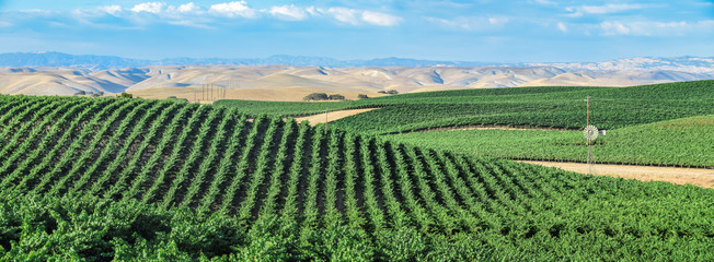 California Vineyards: Rolling hills, valleys, rows of grapevines and wineries are common in the wine country fields of rural Northern and Central California such as Napa, Sonoma and Monterey County. Wall mural