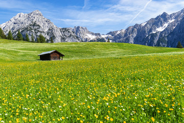 Wall Mural - Amazing view of austrian alps and meadow near Walderalm, Austria, Gnadenwald, Tyrol Region