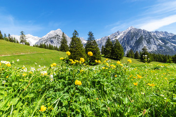 Wall Mural - Alps view with yellow flowers. Summer mountain landscape