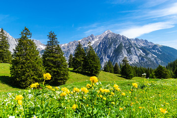 Wall Mural - Picturesque meadows and forest are located amond the high mountains. Austria, Gnadenwald, Tyrol Region.