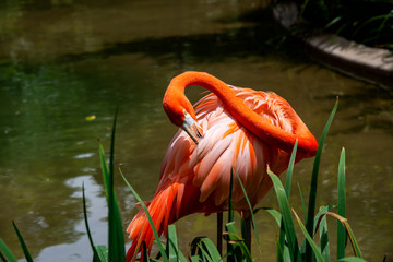 flamingo at the zoo
