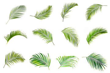 Wall Murals Palm tree collection of palm leaves isolated on white background.