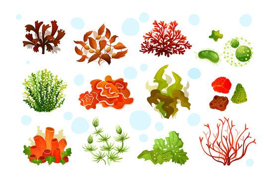 Marine aquarium flora, coral reef underwater seaweeds, ocean plants