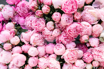 Floral carpet or Wallpaper. Background of pink peonies. Morning light in the room. Beautiful peony flower for catalog or online store. Floral shop and delivery concept .