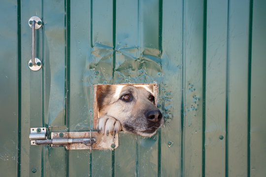 Image of dog's face sticking out of window in fence