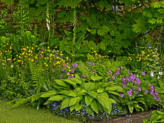 Detail of a  colourful flower border with a Hosta as centre piece
