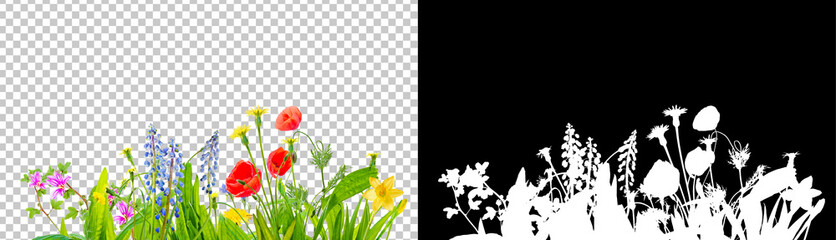 Wall Mural - spring grass and daisy wildflowers isolated with clipping path and alpha channel