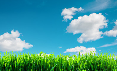 Wall Mural - a field with green grass background