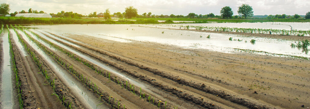 Agricultural land affected by flooding. Flooded field. The consequences of rain. Agriculture and farming. Natural disaster and crop loss risks. Ukraine Kherson region. Selective focus