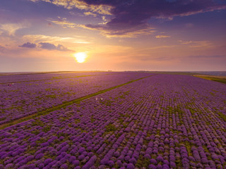 Papiers peints Grenat Beautiful image of lavender field Summer sunset landscape. Aerial drone.