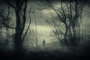 Wall Murals Forest horror forest landscape, surreal haunted woods with scary silhouette at night