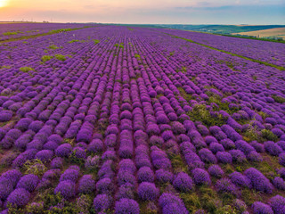Beautiful image of lavender field Summer sunset landscape. Aerial drone.