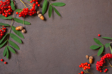 Wall Mural - Brown background with bright ripe rowen and acorns