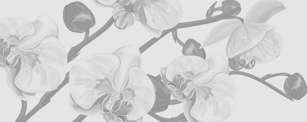 Background with  Orchids flowers. Vector illustration, EPS 10