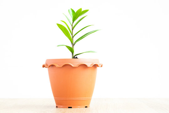 plant in pot isolated on white background