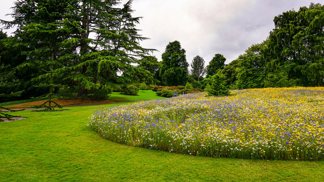 A huge flower bed, which grow wildflowers in the botanical garden of Edinburgh