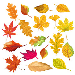 autumn color leaves isolate on white background. vector illustration