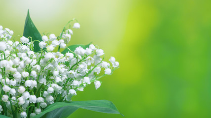 Lily of the valley (Convallaria majalis), blooming spring flowers, closeup with space for text....