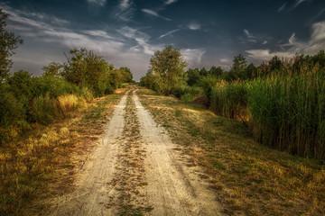 wiejska droga piaszczysta wśród pól i drzew
