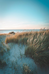 Fototapeta Dunes at sunset on bright blue days at the beach. Dune grass blowing in the summer breeze