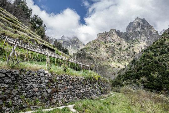 Vineyard on the mountain terraces