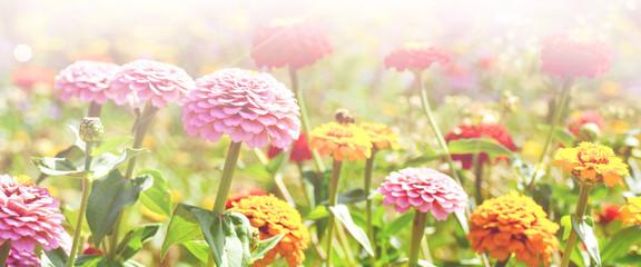 Blumen Wiese mit Insekten - Sommer Hintergrund Blumenwiese