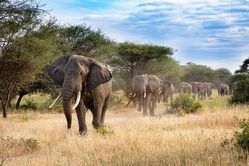 Foto op Aluminium Olifant Elephant Procession
