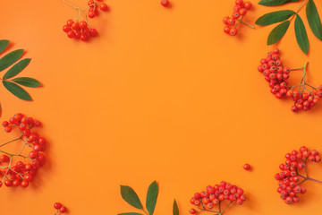 Wall Mural - Autumn background with with bright ripe rowen and leaves
