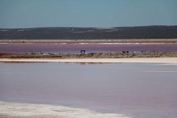 Pink Lake or Hutt Lagoon in Western Australia, Oceania